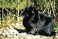 Rabbit13.JPG