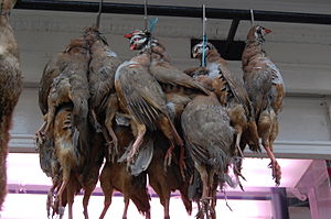Red-legged partridge - Red-legged partridge hanging for sale outside a butcher's shop in Ludlow, Shropshire, England