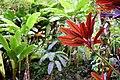 Red Leaf, Green Leaf (24136770010).jpg