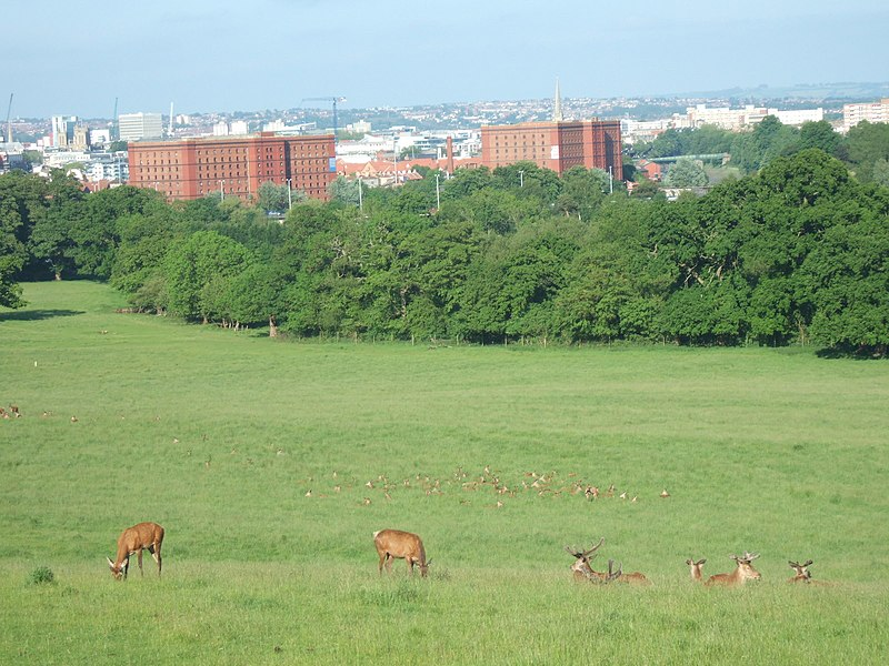 File:Red deer at Ashton Court, overlooking the city of Bristol (geograph 2191279).jpg