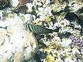 Red sea-reef 3344.jpg