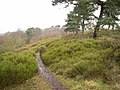 Rednal Hill - geograph.org.uk - 127465.jpg