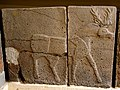 Relief orthostat showing a buck. From Sam'al citadel. 9th century BC. Museum of the Ancient Orient, Istanbul.jpg
