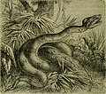 Reptiles and birds - a popular account of their various orders, with a description of the habits and economy of the most interesting (1883) (14565656808).jpg