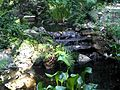 Restored Dupree Gardens Waterfall.jpg
