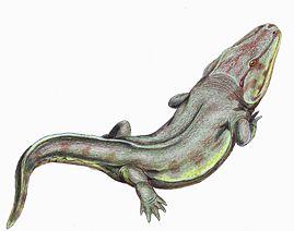 Rhinesuchus1DB.jpg