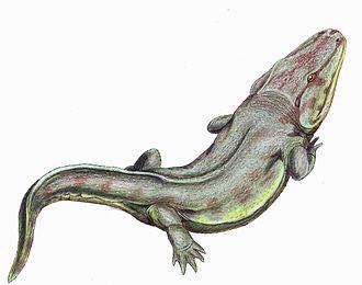 Rhinesuchus - Restoration of Rhinesuchus
