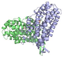 Ribonukleotiddiphosphat-Reduktase, kleine Untereinheit