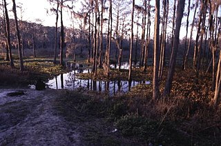 Archaeological site in Florida, US