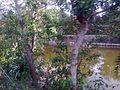 Road side view at chalna, Khulna - 35.jpg