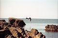 Rocky beach Krk.jpg