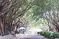 SZ 深圳 Shenzhen 福田 Futian 紅荔路 Hongli Road 蓮花山 Lianhuashan Park GD Greenway trees lane Sept 2017 IX1 01.jpg