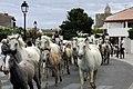 Saintes Maries de la Mer-Fête du cheval-20110717.jpg