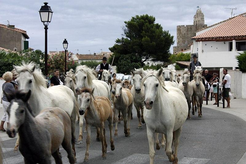 https://upload.wikimedia.org/wikipedia/commons/thumb/c/c0/Saintes_Maries_de_la_Mer-F%C3%AAte_du_cheval-20110717.jpg/800px-Saintes_Maries_de_la_Mer-F%C3%AAte_du_cheval-20110717.jpg