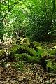Sandlay Wood Pile - geograph.org.uk - 1305868.jpg