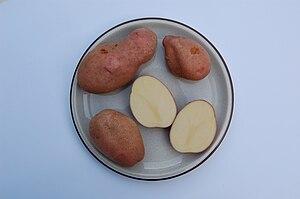 "English: Potatoe varietie ""Sarpo Mira&quo..."