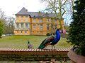 Schloss Rheydt (V-13).jpg