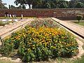 Shalimar garden 4.JPG