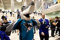 Sharkie is not letting me in to the Sharks game (289667050).jpg
