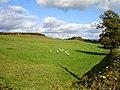 Sheep pasture near Pentre Farm - geograph.org.uk - 587781.jpg