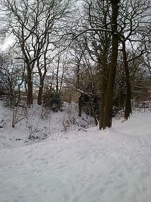 Birley - The Stoneley Woods, an ancient woodland in Charnock, during the Early 2010 Big Freeze (January 2010).