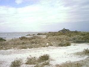 Tilapia as exotic species - Shoreline along the Salton Sea.