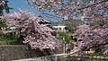 Shukugawa Park in spring.jpg