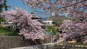 Nishinomiya - Shukugawa Park in spring