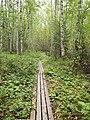 Sippulanniemi nature trail - duckboards 3.jpg