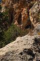 Siur Carmel Nov 06 2010 069.JPG