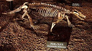 <i>Procynosuchus</i> Extinct genus of cynodonts