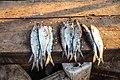 Slechte kwaliteit vis in Senegal.jpg