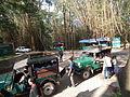 Snap during safari in Wayanad Wildlife Sanctuary 9877.JPG