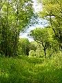 Snarkhurst Woods, ancient woodland - geograph.org.uk - 19687.jpg
