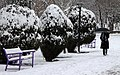 Snow in Mashhad - 17 December 2012 10.jpg