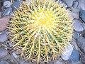 Spines - Flickr - debaird™.jpg