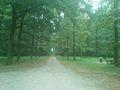 Spomenik prirode Rogot (2).jpg