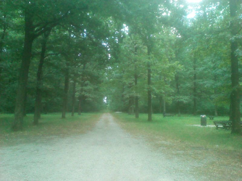 File:Spomenik prirode Rogot (2).jpg