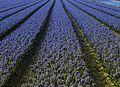 Spring flowers (8691027269).jpg