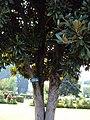 Srinagar - Shalimar Gardens 02.JPG
