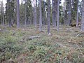 Stöningsbergets naturreservat (2).jpg