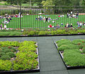 St. Thomas School green roof 01.jpg