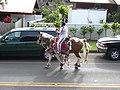 Starr-030705-0007-Cordyline fruticosa-July 4 Parade-Makawao-Maui (24008811974).jpg