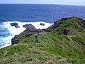 Starr-050406-0173-Solanum americanum-habit with Forest-Alau-Maui (24116403373).jpg