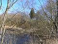 Stasaiciu piliakalnis nuo lankesos upes.jpg