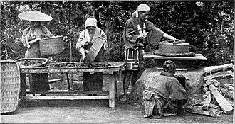 Tea processing - Image: Steaming tea leaves