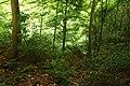 Steenbergse bossen 05.jpg