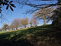 Steep field at Taddiport - geograph.org.uk - 621130.jpg