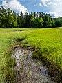 Steigerwald Weilersbachtal 5260036.jpg