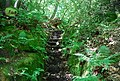 Steps on a steep path, Oldbury Woods - geograph.org.uk - 856829.jpg